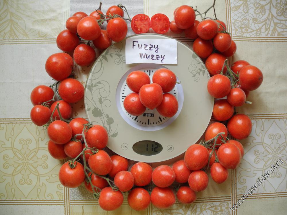 Пушистые томаты Fuzzy Wuzzy