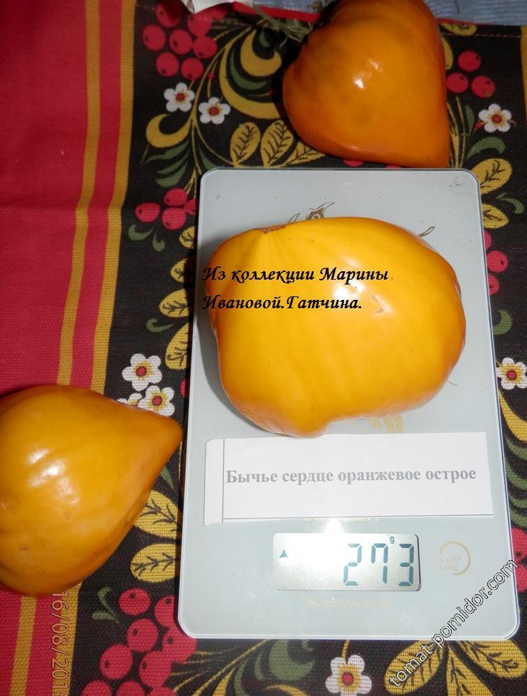 Бычье сердце оранжевое острое