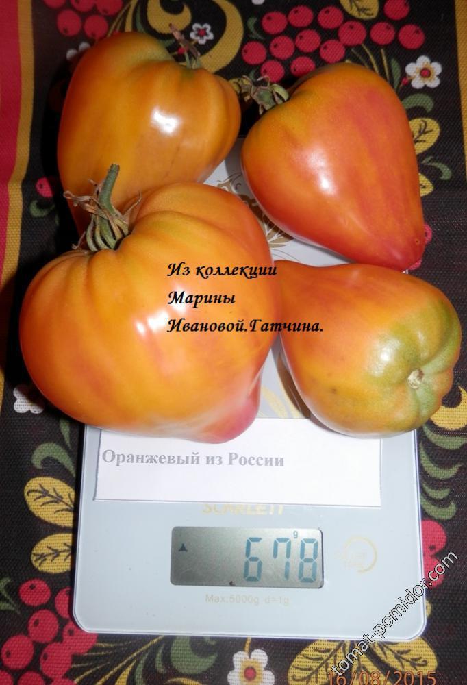 Оранжевый из России