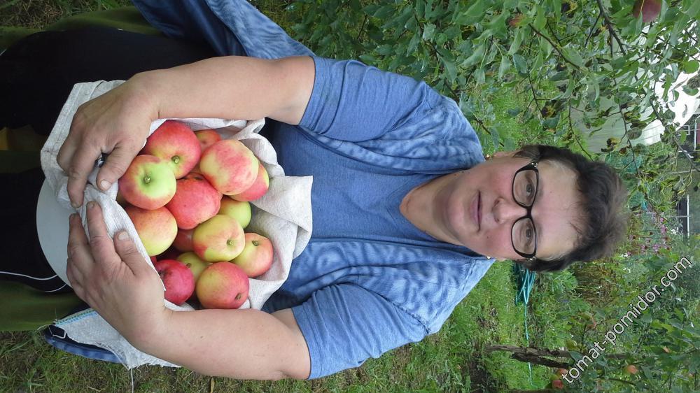 яблоки с Коричной 2015