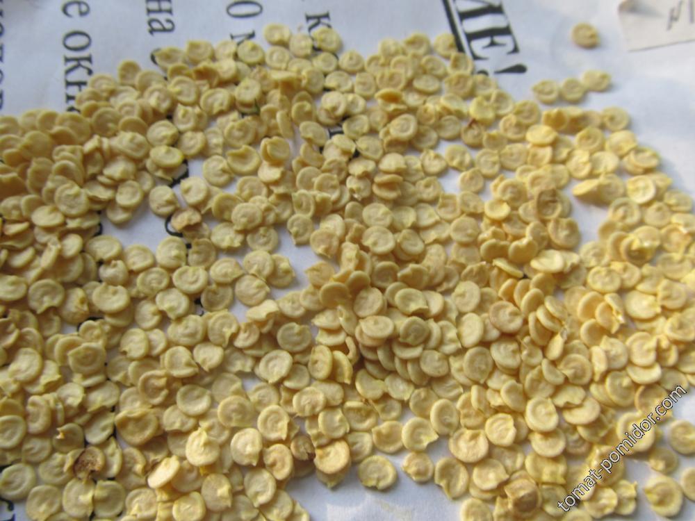 семена перца нормальные желтые