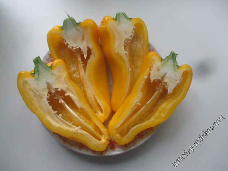 Какаду желтый 2