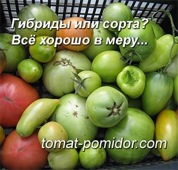 Сорта и гибриды томатов