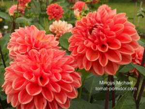 Mingus Michael