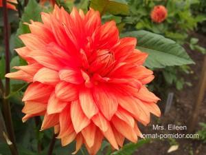 Mrs. Eileen